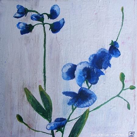 Mėlynos orchidėjos