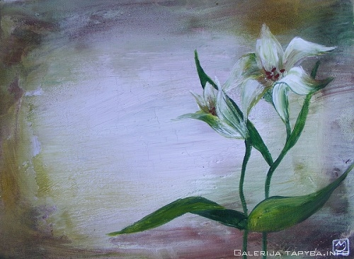 Baltos lelijos