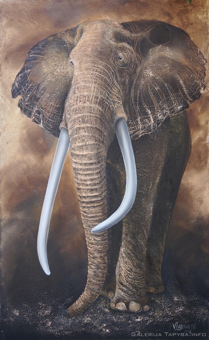 Afrikinis dramblys