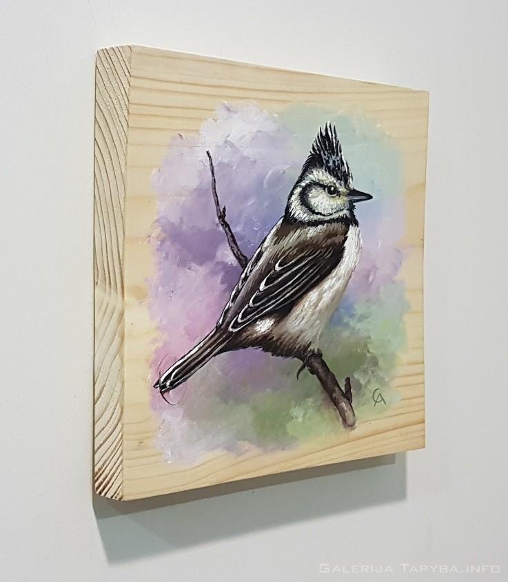 Paukštukas (Kuoduotoji zylė)