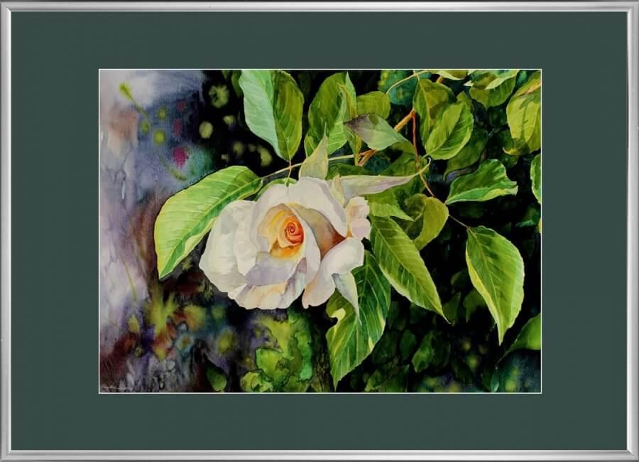 Svajojanti rožė